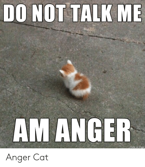 anger: DO NOT TALK ME  AM ANGER  made on imgur Anger Cat