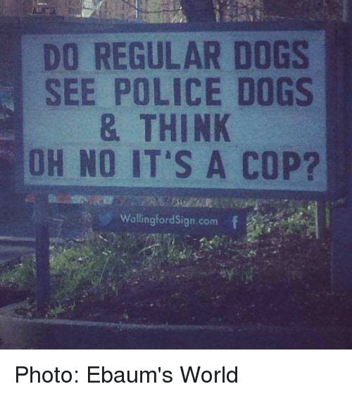 ebaums: DO REGULAR DOGS  SEE POLICE DOGS  & THINK  OH NO IT'S A COP?  wallingford Sign com Photo:  Ebaum's World