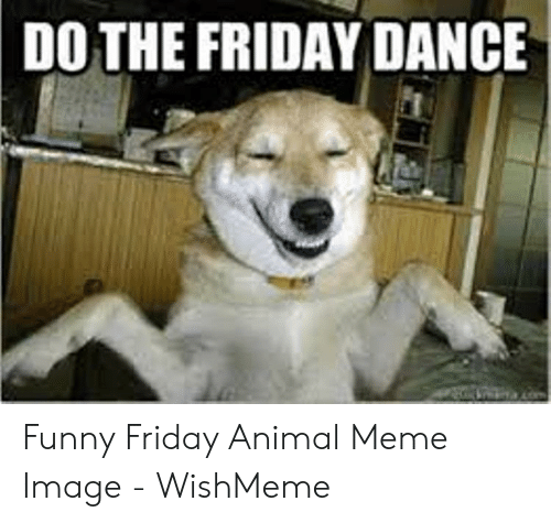 Wishmeme: DO THE FRIDAY DANCE Funny Friday Animal Meme Image - WishMeme