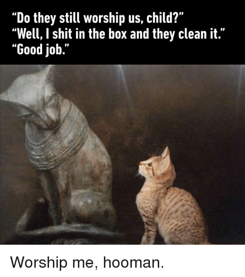 "Dank, Shit, and Good: ""Do they still worship us, child?""  ""Well, I shit in the box and they clean it.""  ""Good job."" Worship me, hooman."