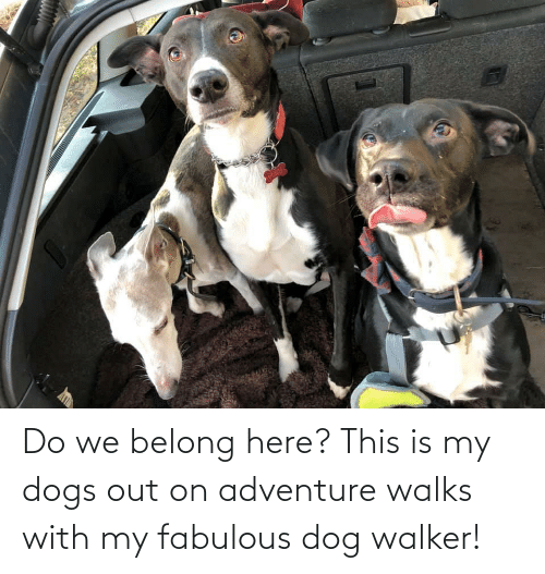 walker: Do we belong here? This is my dogs out on adventure walks with my fabulous dog walker!