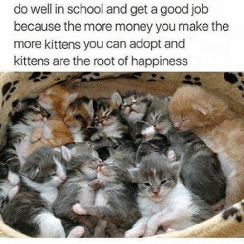 Money, School, and Good: do well in school and get a good job  because the more money you make the  more kittens you can adopt and  kittens are the root of happiness