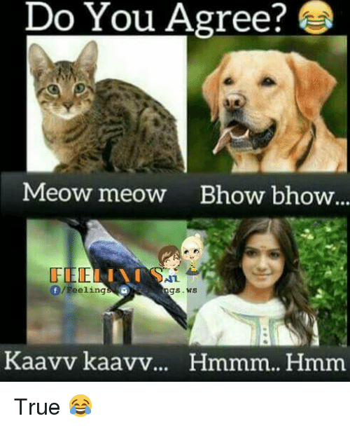 Memes, 🤖, and Hmm: Do You Agree?  Meow meow Bhow bhow...  /Feeling  gs WS  Kaavv kaavv  Hmmm.. Hmm True 😂