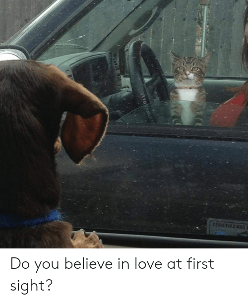 Dank, Love, and At First Sight: Do you believe in love at first sight?