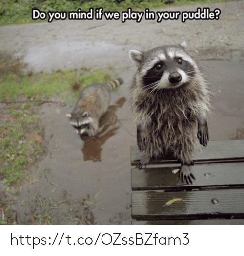 Mind: Do you mind if we play in your puddle? https://t.co/OZssBZfam3
