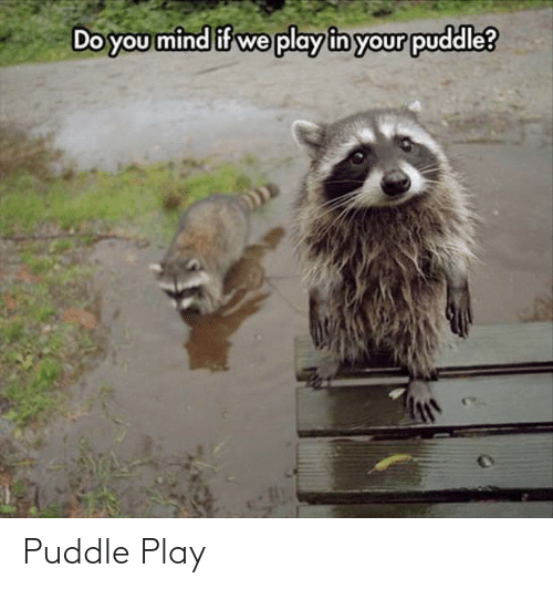 Mind: Do you mind if we play in your puddle? Puddle Play