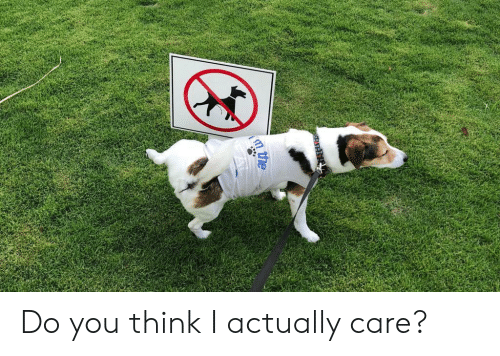 Think, You, and Do You: Do you think I actually care?