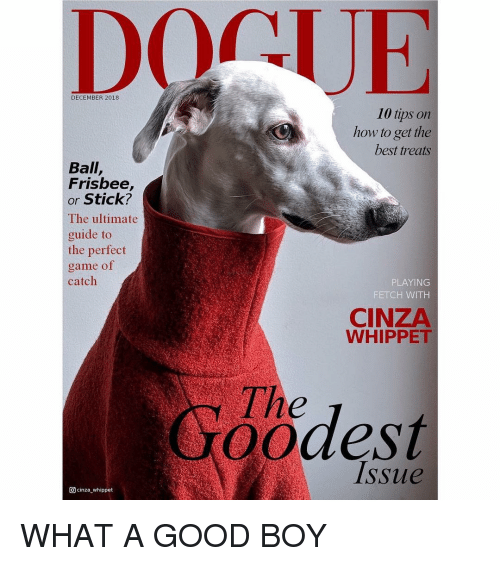 Funny, Best, and Game: DOCUE  DECEMBER 2018  10 tips on  how to get the  best treats  Ball,  Frisbee,  or Stick?  The ultimate  guide to  the perfect  game of  catch  PLAYING  FETCH WITH  CINZA  WHIPPET  The  odes  Issue  回cinza-whippet WHAT A GOOD BOY