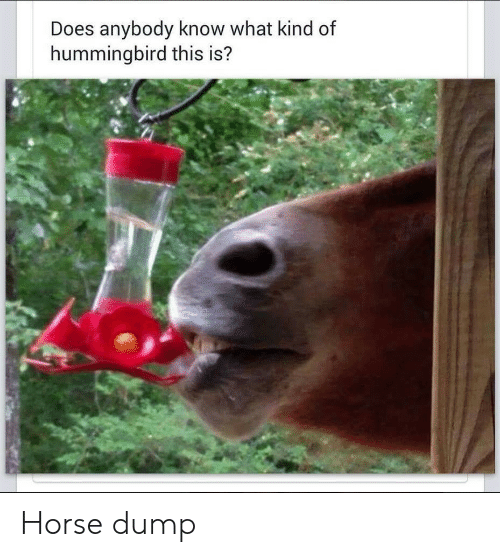 What Kind Of: Does anybody know what kind of  hummingbird this is? Horse dump