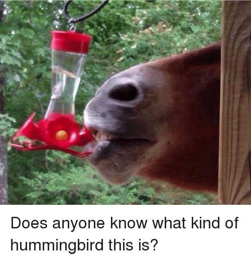 Hummingbird: Does anyone know what kind of hummingbird this is?