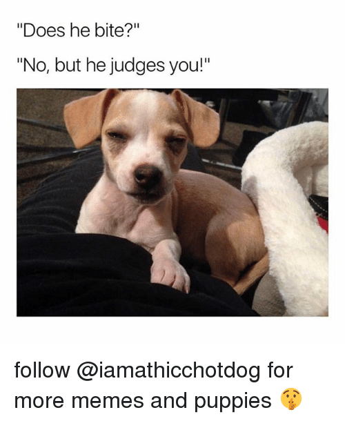 """Memes, Puppies, and You: """"Does he bite?""""  """"No, but he judges you!"""" follow @iamathicchotdog for more memes and puppies 🤫"""