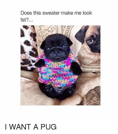 Make Me Look Fat: Does this sweater make me look  fat? I WANT A PUG