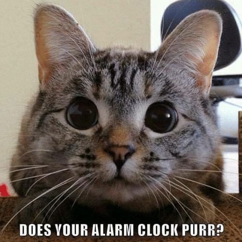 purr: DOES YOUR ALARM CLOCK PURR?