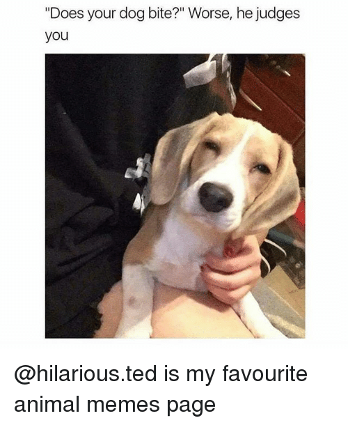 "Dog Bite: ""Does your dog bite?"" Worse, he judges  you @hilarious.ted is my favourite animal memes page"