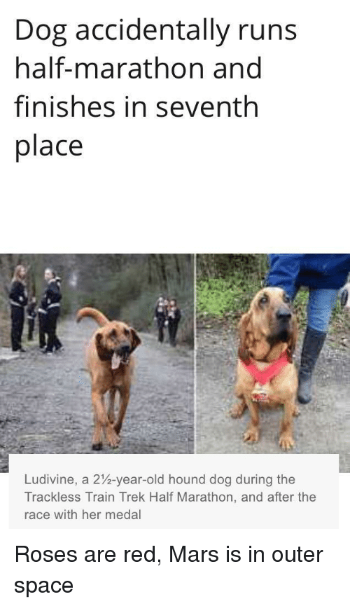 Mars, Space, and Train: Dog accidentally runs  half-marathon and  finishes in seventh  place  Ludivine, a 2%-year-old hound dog during the  Trackless Train Trek Half Marathon, and after the  race with her medal <p>Roses are red, Mars is in outer space</p>