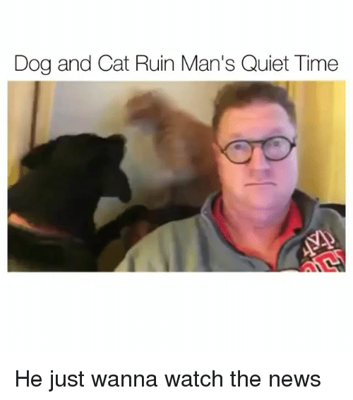 Funny, News, and Quiet: Dog and Cat Ruin Man's Quiet Time He just wanna watch the news
