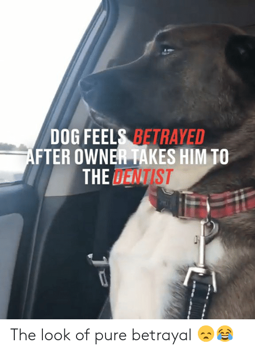 dentist: DOG FEELS BETRAYED  AFTER OWNER TAKES HIM TO  THE DENTIST The look of pure betrayal 😞😂