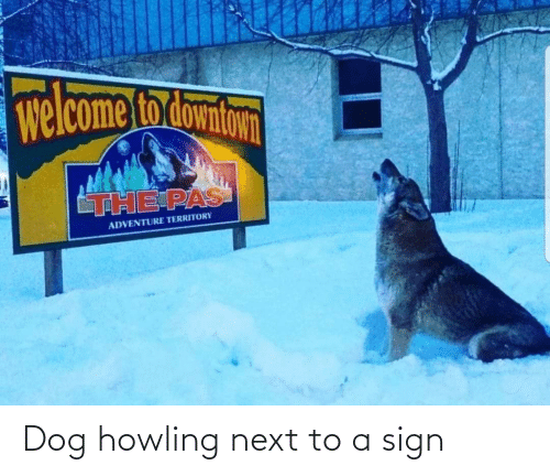 howling: Dog howling next to a sign