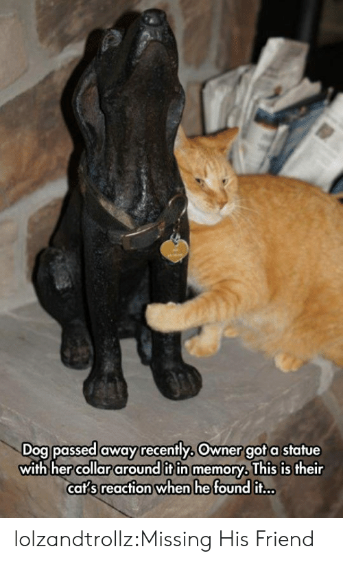 Tumblr, Blog, and Got: Dog passed away recently, Owner got a statue  with hercollar around it in memory, This is their  caf sreacfion when he found iT.. lolzandtrollz:Missing His Friend