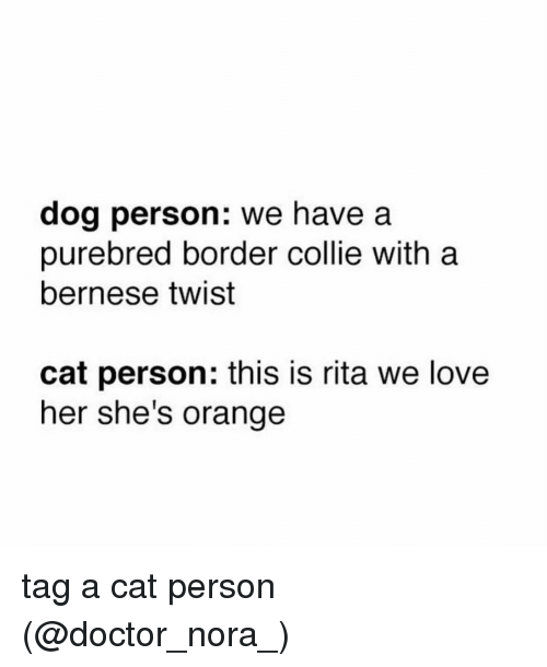 Border Collie: dog person: we have a  purebred border collie with a  bernese twist  cat person: this is rita we love  her she's orange tag a cat person (@doctor_nora_)