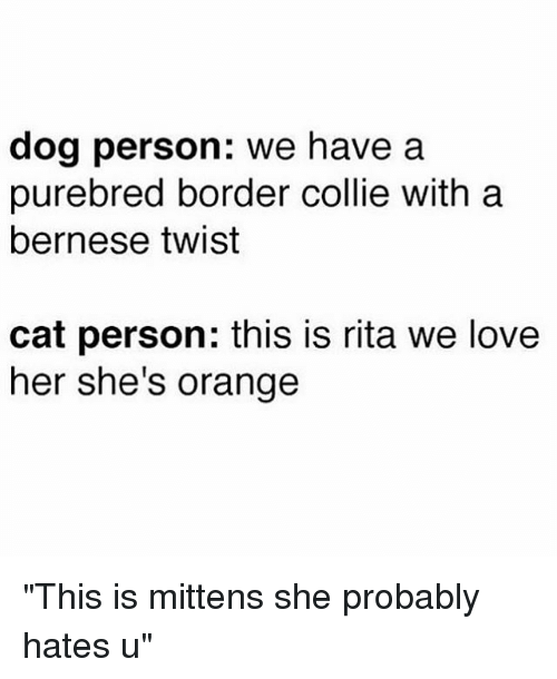 """Border Collie, Orange, and Girl Memes: dog person: we have a  purebred border collie with a  bernese twist  cat person: this is rita we love  her she's orange """"This is mittens she probably hates u"""""""
