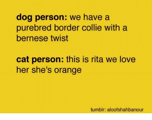 Love, Tumblr, and Grumpy Cat: dog person: we have a  purebred border collie with a  bernese twist  cat person: this is rita we love  her she's orange  tumblr: aloofshahbanour
