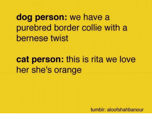Love, Memes, and Tumblr: dog person: we have a  purebred border collie with a  bernese twist  cat person: this is rita we love  her she's orange  tumblr: aloofshahbanour