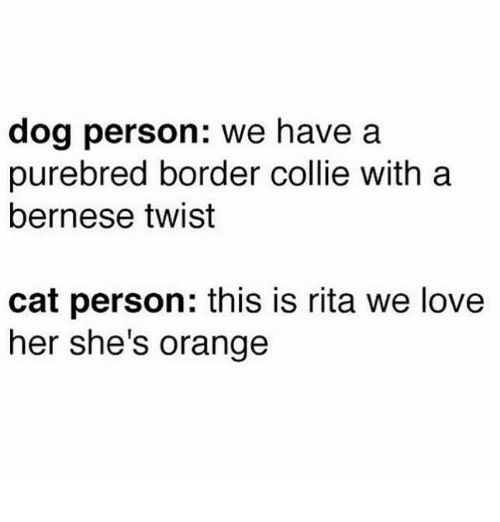 Border Collie: dog person: we have a  purebred border collie with a  bernese twist  cat person: this is rita we love  her she's orange