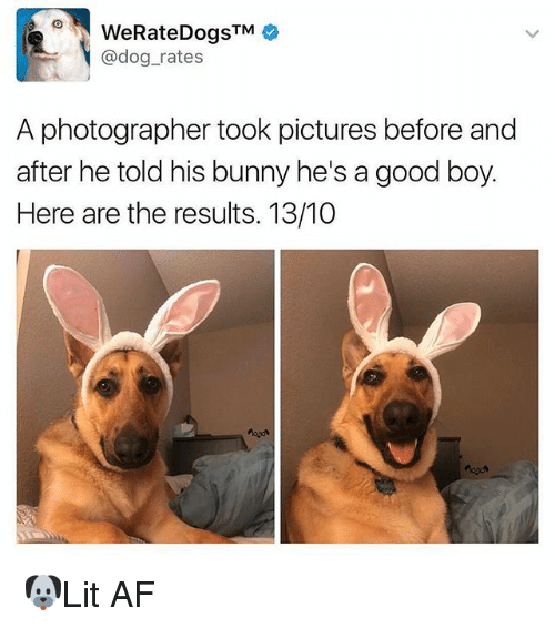Af, Memes, and Good: @dog_rates  A photographer took pictures before and  after he told his bunny he's a good boy  Here are the results. 13/10 🐶Lit AF