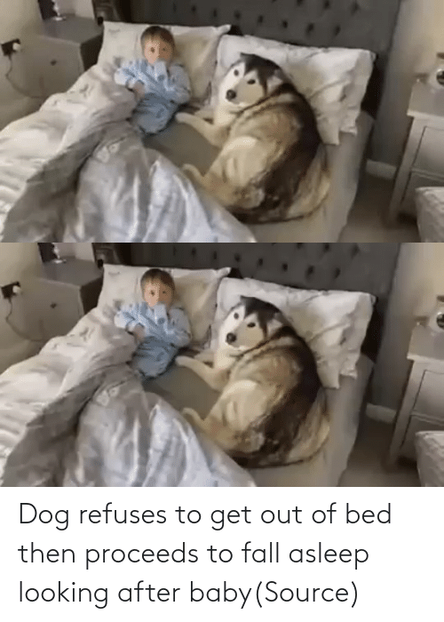 get out: Dog refuses to get out of bed then proceeds to fall asleep looking after baby(Source)