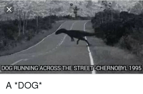 Running, Dog, and Chernobyl: DOG RUNNING ACROSS THE STREET-CHERNOBYL 1995 A *DOG*