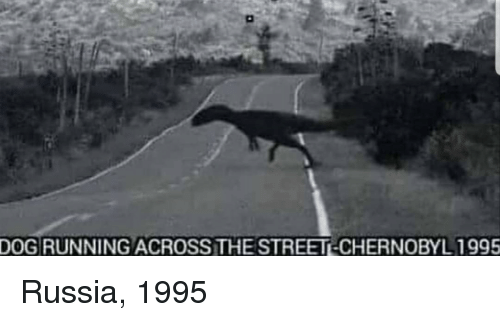 Russia, Running, and Dog: DOG RUNNING ACROSS THE STREET-CHERNOBYL 1995 Russia, 1995