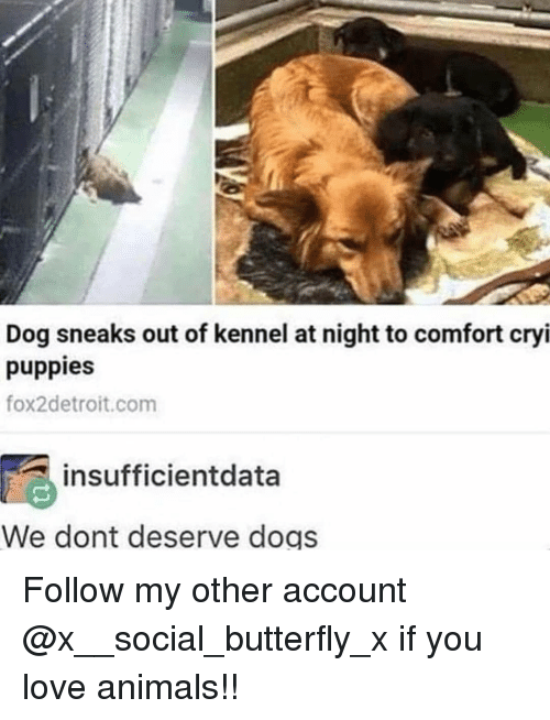 Animals, Dogs, and Love: Dog sneaks out of kennel at night to comfort cryi  puppies  fox2detroit.com  insufficientdata  We dont deserve dogs Follow my other account @x__social_butterfly_x if you love animals!!