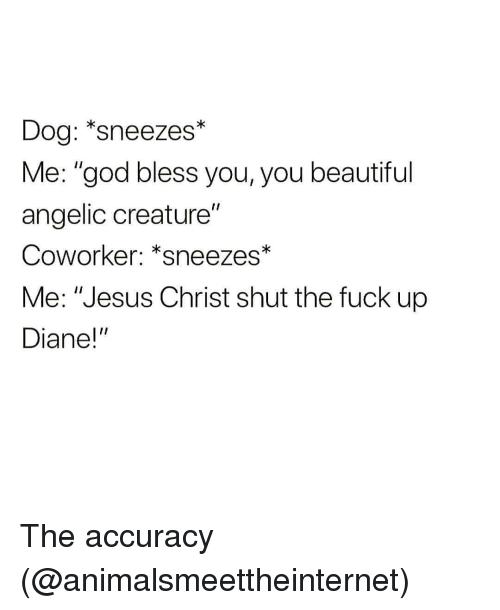 "Angelic: Dog: *sneezes*  Me: ""god bless you, you beautiful  angelic creature""  Coworker: *sneezes*  Coworker: ""sneezes  Me: ""Jesus Christ shut the fuck up  Diane!"" The accuracy (@animalsmeettheinternet)"
