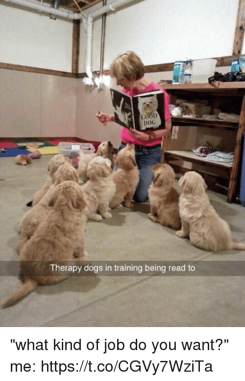 "Dogs, Memes, and 🤖: DOG  Therapy dogs in training being read to ""what kind of job do you want?"" me: https://t.co/CGVy7WziTa"