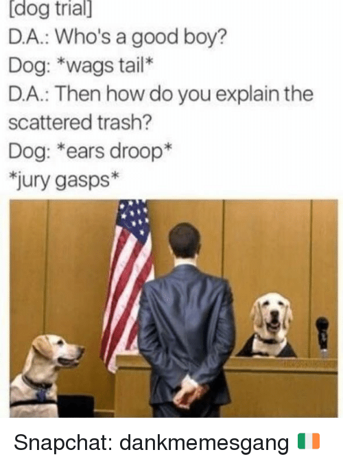 Memes, Snapchat, and Trash: [dog  trial]  D.A.: Who's a good boy?  Dog: *wags tail*  D.A.: Then how do you explain the  scattered trash?  Dog: *ears droop*  jury gasps* Snapchat: dankmemesgang 🇮🇪