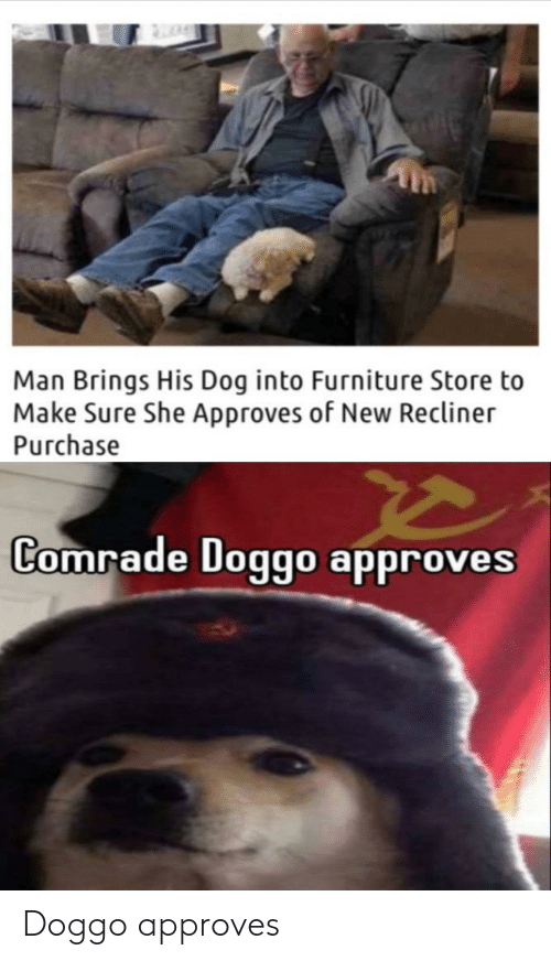 Approves: Doggo approves