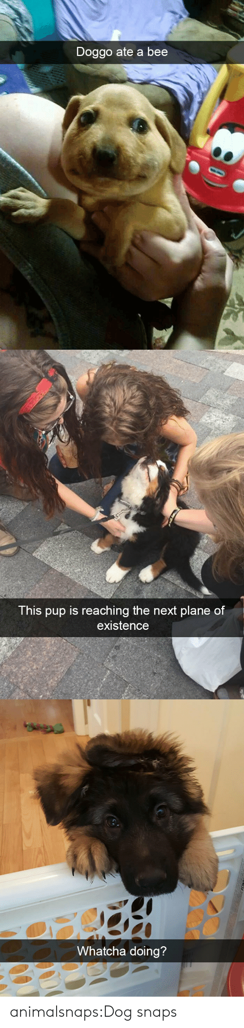 Reaching: Doggo ate a bee   This pup is reaching the next plane of  existence   Whatcha doing?  CA animalsnaps:Dog snaps