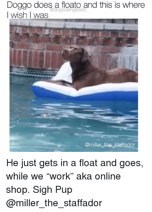 "Memes, Pup, and 🤖: Doggo does a floato and this is where  I wish I was  T.  @miller_the_staffador He just gets in a float and goes, while we ""work"" aka online shop. Sigh Pup @miller_the_staffador"