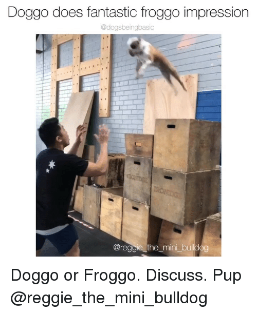 Memes, Reggie, and Bulldog: Doggo does fantastic froggo impression  @dogsbeingbasic  @reggie_the_mini_bulldog Doggo or Froggo. Discuss. Pup @reggie_the_mini_bulldog