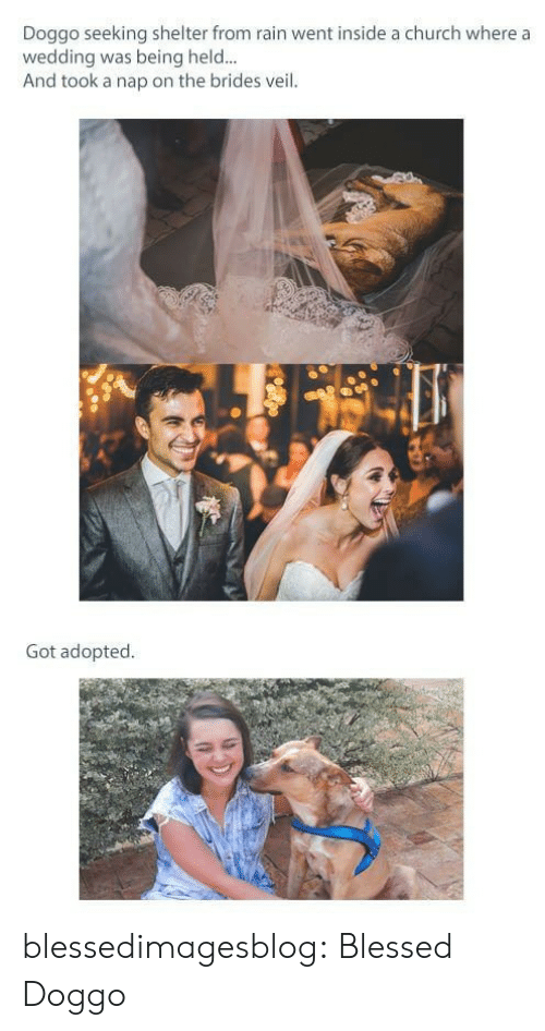 Blessed, Church, and Tumblr: Doggo seeking shelter from rain went inside a church where a  wedding was being held...  And took a nap on the brides veil.  Got adopted. blessedimagesblog:  Blessed Doggo