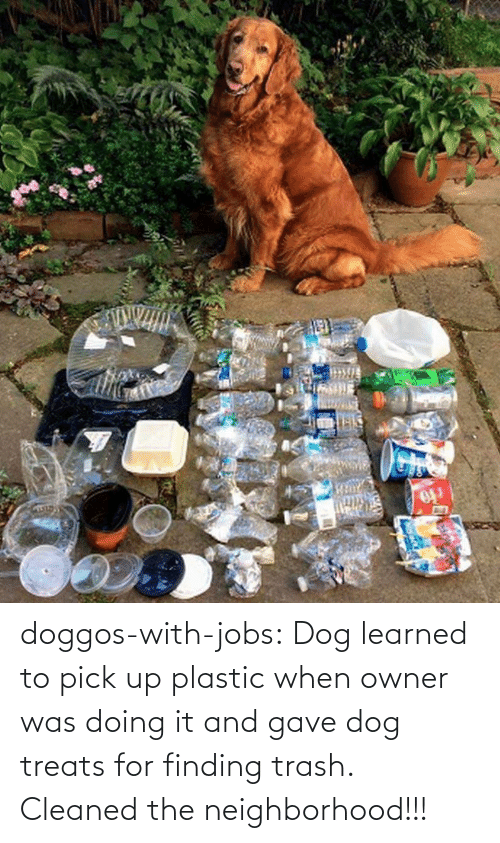 owner: doggos-with-jobs: Dog learned to pick up plastic when owner was doing it and gave dog treats for finding trash. Cleaned the neighborhood!!!