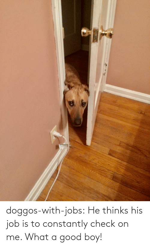 job: doggos-with-jobs:  He thinks his job is to constantly check on me. What a good boy!