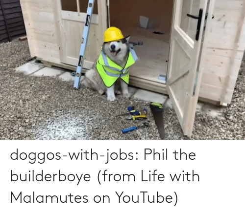Life: doggos-with-jobs:  Phil the builderboye (from Life with Malamutes on YouTube)