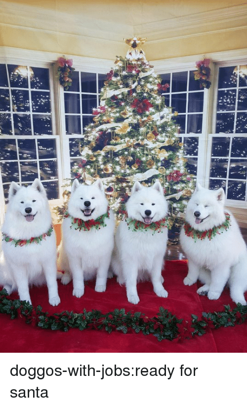 Tumblr, Blog, and Jobs: doggos-with-jobs:ready for santa