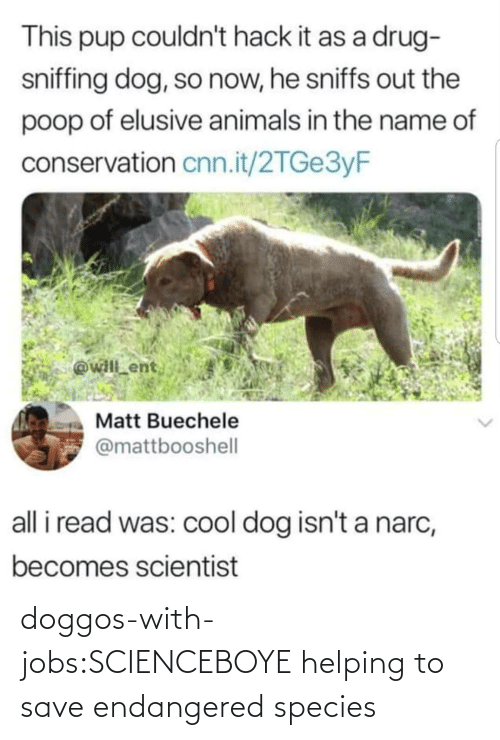 Jobs: doggos-with-jobs:SCIENCEBOYE helping to save endangered species