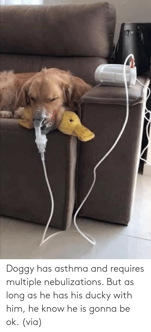 Requires: Doggy has asthma and requires multiple nebulizations. But as long as he has his ducky with him, he know he is gonna be ok. (via)