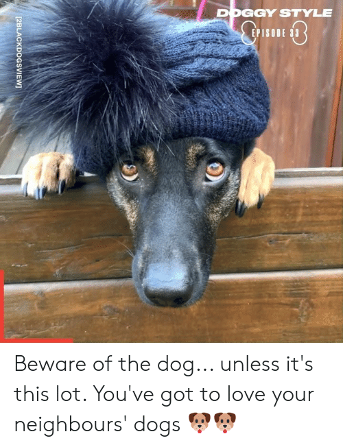 doggy: DOGGY STYLE  EPISO  [2BLACKDOGSVIEW Beware of the dog... unless it's this lot. You've got to love your neighbours' dogs 🐶🐶