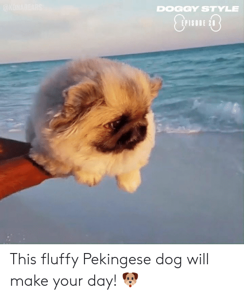 fluffy: DOGGY STYLE  EPISODE 28 This fluffy Pekingese dog will make your day! 🐶