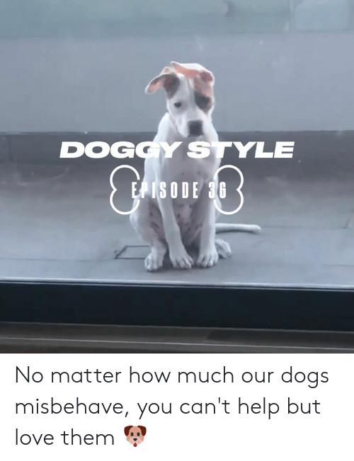 doggy: DOGGY STYLE  EPISODE 36 No matter how much our dogs misbehave, you can't help but love them 🐶